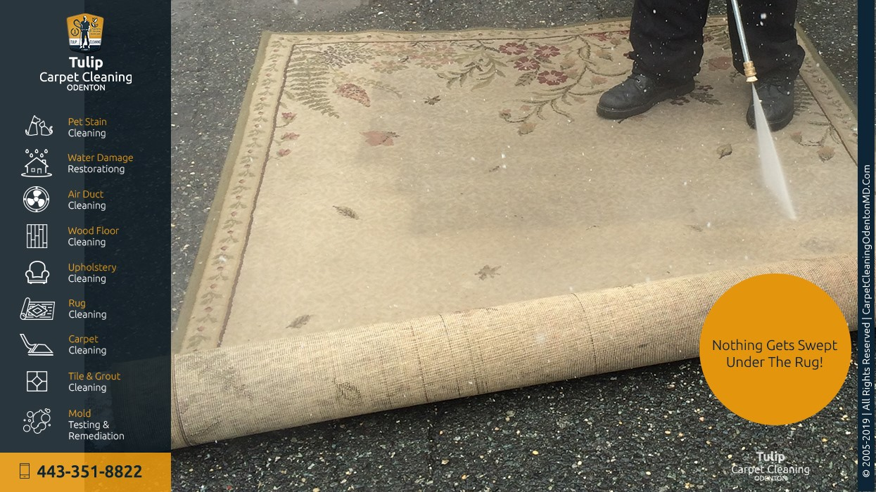 Tulip Carpet Cleaning Odenton