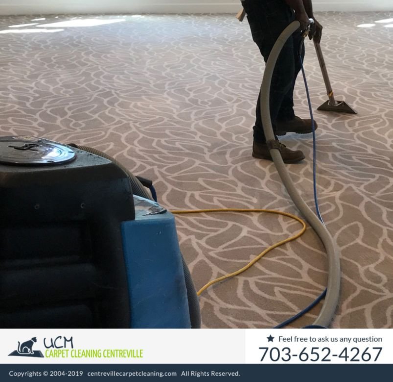 Carpet Steam Cleaning Centreville