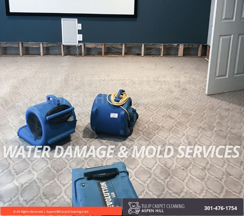 Mold And Water Damage Restoration