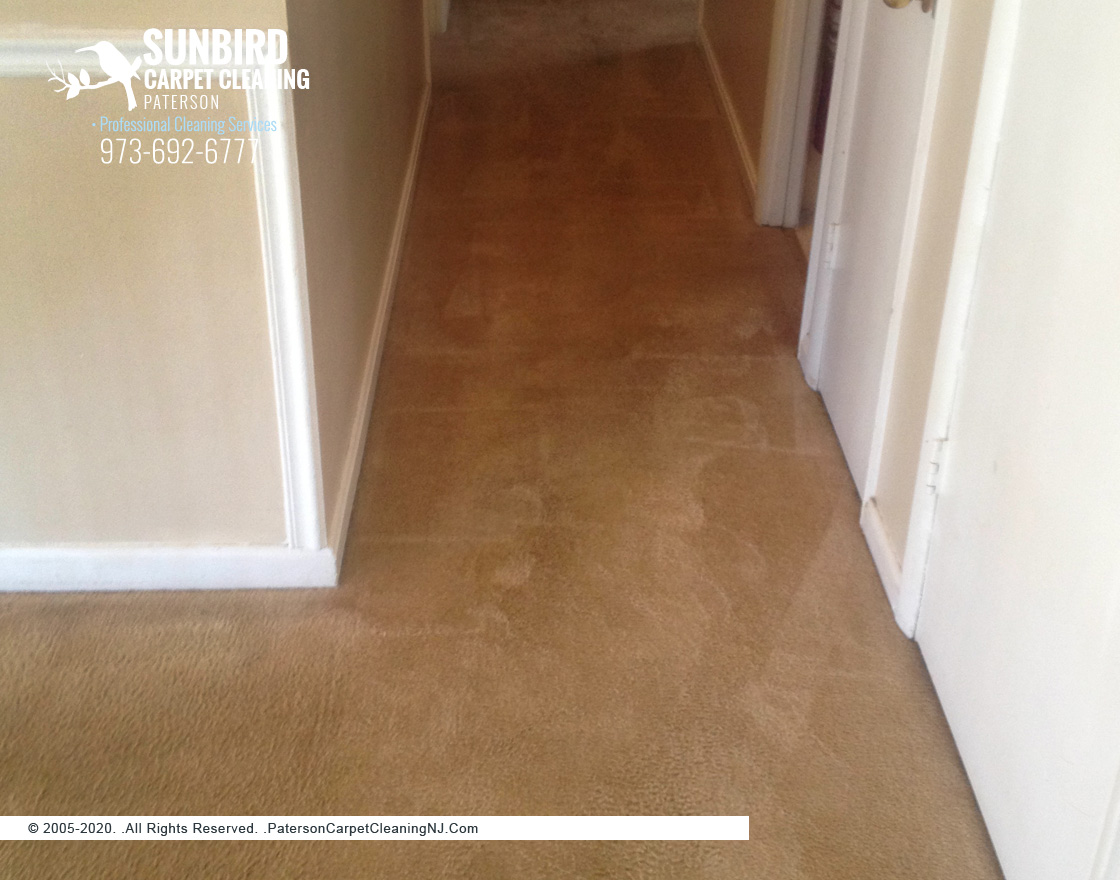 Residential Carpet Cleaning Company Paterson