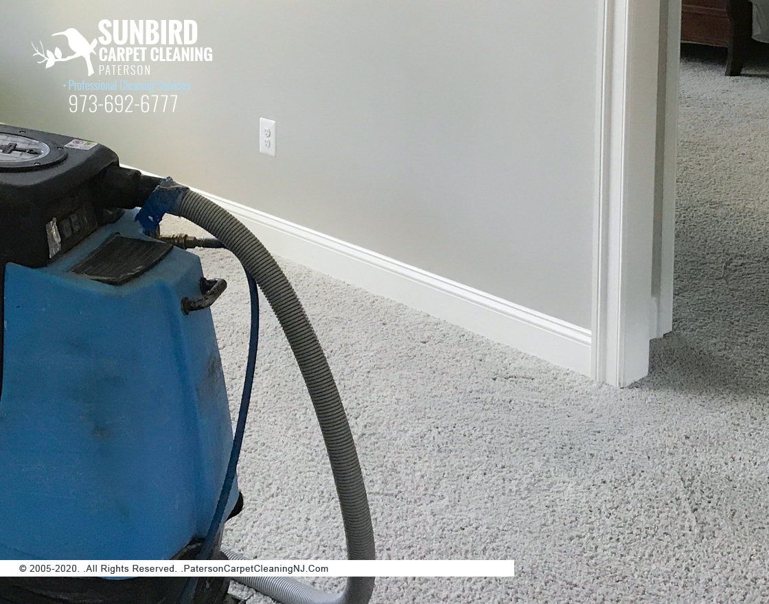 Steam Carpet Cleaning Services