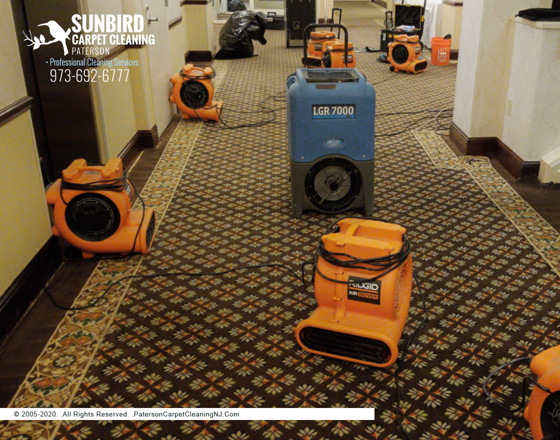 Wet Carpet Cleaning And Drying Services Paterson