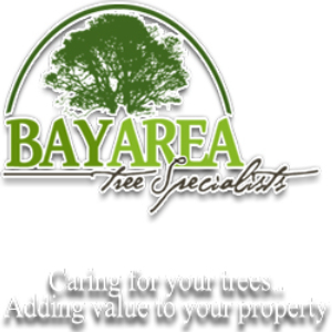 Bay Area Tree Specialists - Tree Care & Pruning