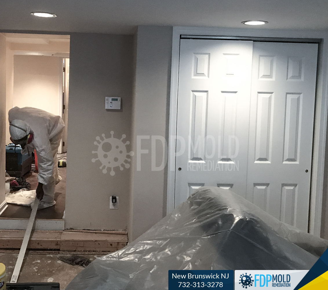 FDP Mold Remediation New Brunswick house cleaning directory