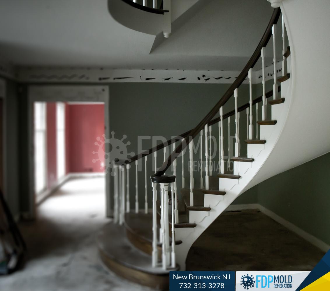 FDP Mold Remediation New Brunswick